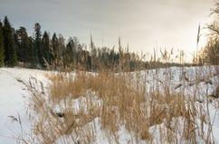 Foresta nevosa di inverno Fotografia Stock