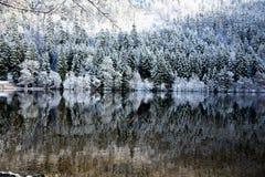Foresta nevosa di inverno riflessa nel lago Longemer fotografie stock libere da diritti