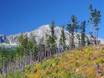 Foresta nociva in alte montagne di Tatra Immagini Stock