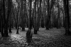 Foresta nordamericana in bianco e nero fotografia stock libera da diritti