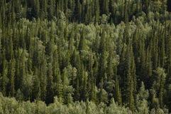Foresta nordica Fotografia Stock