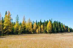 Foresta nordica di Ontario Immagini Stock