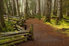Foresta nordica muscosa Immagine Stock Libera da Diritti