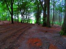 Foresta in Olanda durante la stagione di caduta immagini stock