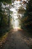 Foresta olandese in autunno Fotografia Stock