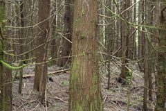 Foresta per gli alberi Immagini Stock