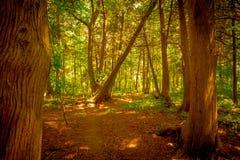 Foresta per gli alberi Fotografie Stock