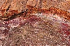 Foresta petrificata, Arizona, U.S.A. Immagini Stock