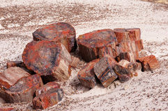 Foresta petrificata, Arizona, U.S.A. Fotografia Stock