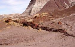 Foresta petrificata, Arizona, U.S.A. Immagini Stock Libere da Diritti