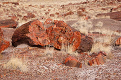 Foresta petrificata, Arizona, U.S.A. Fotografia Stock Libera da Diritti