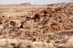 Foresta petrificata, Arizona, U.S.A. Immagine Stock Libera da Diritti
