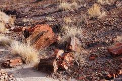 Foresta petrificata, Arizona, U.S.A. Fotografie Stock