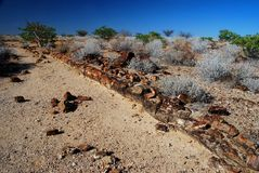 Foresta petrificata. Khorixas, Damaraland, Namibia Fotografia Stock
