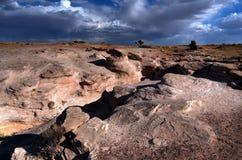 Foresta Petrified fotografia stock libera da diritti