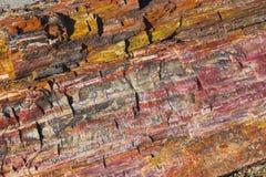 Foresta Petrified immagini stock libere da diritti