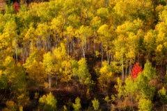 Foresta piena di autunno della struttura con le foglie di rosso e di verde giallo fotografie stock libere da diritti