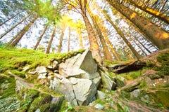 Foresta piena di sole Immagine Stock