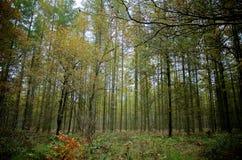 Foresta in pieno della scenetta degli alberi Fotografia Stock Libera da Diritti