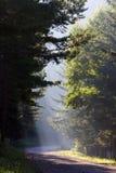 Foresta in pieno di sole Fotografie Stock