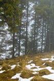 Foresta Piny Immagini Stock Libere da Diritti
