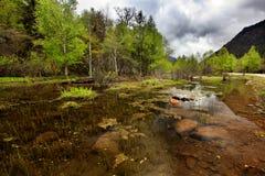 Foresta in pioggia chiara fotografia stock
