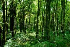 foresta pluviale Immagine Stock