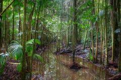 Foresta pluviale immagine stock libera da diritti