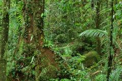 Foresta pluviale fotografia stock