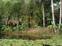 Foresta pluviale fotografie stock