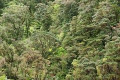 Foresta pluviale Immagini Stock Libere da Diritti