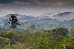 Foresta pluviale africana Fotografia Stock Libera da Diritti