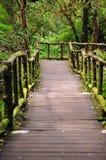 Foresta pluviale al intanon di Doi Immagine Stock