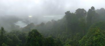 Foresta pluviale australiana Fotografie Stock Libere da Diritti