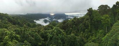Foresta pluviale australiana Immagine Stock Libera da Diritti