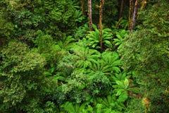 Foresta pluviale australiana famosa immagini stock libere da diritti