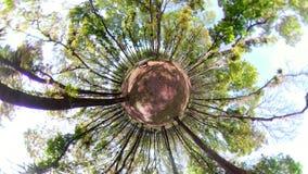 Foresta pluviale con i grandi alberi