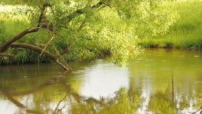 Foresta pluviale con la corrente che la attraversa Le gocce di pioggia gocciolano nei cerchi del fiume sull'acqua video d archivio