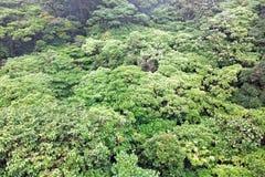 Foresta pluviale, Costa Rica Fotografia Stock