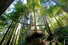 Foresta pluviale costiera di Beautuiful in Columbia Britannica Immagini Stock