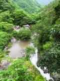 Foresta pluviale del Porto Rico Fotografia Stock