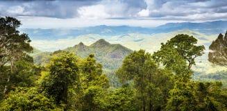 Foresta pluviale del Queensland Fotografia Stock Libera da Diritti