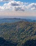 Foresta pluviale del Queensland Fotografie Stock