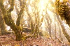 Foresta pluviale della montagna del Virgin di Marlborough, NZ Fotografia Stock