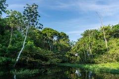 Foresta pluviale di Amazon Fotografia Stock Libera da Diritti