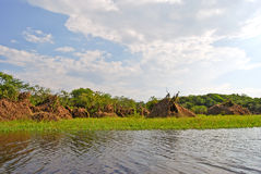 Foresta pluviale di Amazon: Abbellisca lungo la riva del Rio delle Amazzoni vicino a Manaus, Brasile Sudamerica Fotografie Stock Libere da Diritti