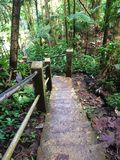 Foresta pluviale di EL Yunque Fotografie Stock