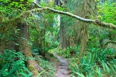 Foresta pluviale di Hoh Fotografia Stock Libera da Diritti