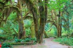 Foresta pluviale di Hoh Fotografie Stock