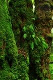 Foresta pluviale di nord-ovest pacifica Immagine Stock